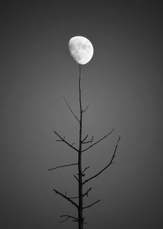Do you think i would be safer.if i just kick him out.my blood pressure is scary high, I'm extremely stressed, unless what I want is which I can't guarantee. Luna Moon, Moon Photography, Beautiful Moon, Good Morning Good Night, Storm Clouds, Moon Child, Stars And Moon, Natural World, Black And White Photography