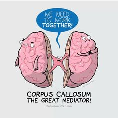 corpus callosum acts like a mailman to each side of the, Cephalic Vein