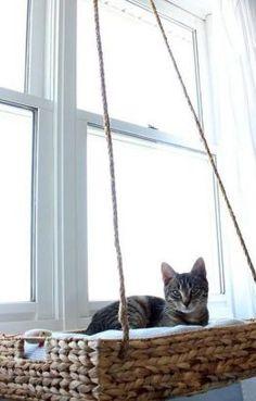 diy hanging basket cat perch, how to, pets animals, repurposing upcycling - Wonderful Diy Ideas Diy Hanging, Hanging Baskets, Crazy Cat Lady, Crazy Cats, Lit Chat Diy, Cat Window Perch, Window Bed, Window Sill, Diy Cat Bed
