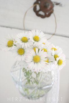 <3  daisies