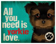 All You Need is Yorkie Love Poster Schnauzers, Yorkies, Chihuahuas, Shih Tzu, All You Need Is, I Love Dogs, Puppy Love, Cute Puppies, Cute Dogs