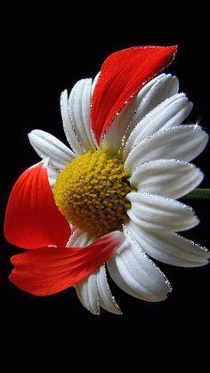 Flor Animación                                                                                                                                                                                 Más