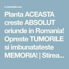 Planta ACEASTA creste ABSOLUT oriunde in Romania! Opreste TUMORILE si imbunatateste MEMORIA! | Stirea Zilei Stevia, Health Fitness, Plant, Fitness, Health And Fitness