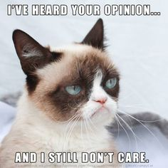 grumpy cat thinks your opinion is mute!