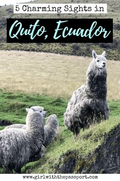Doing some Ecuador travel and want to experience the best of Ecuador culture and Ecuador photography? Then look no further because this post details the best Ecuador travel tips, top Ecuador travel things to do, and the best Ecuador travel places to visit. Check this post out and get the most out of your vacation to Quito, Ecuador.