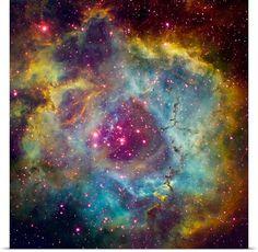 Looks like a galatic flower!