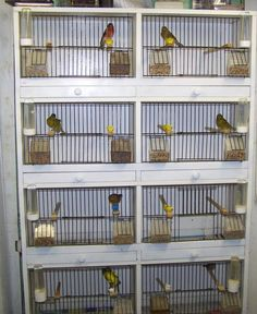 Google Image Result for http://www.freewebs.com/charlies-song-birds/1muledisplaycage.jpg