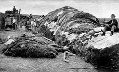 Kansas The Old West....Buffalo hides in Dodge City, Kansas. Photograph April 4, 1874.
