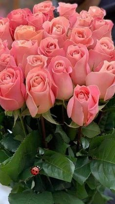 Pack of 25 Pink Roses Beautiful Rose Flowers, Beautiful Flowers Wallpapers, Beautiful Flower Arrangements, Exotic Flowers, Amazing Flowers, Pretty Flowers, Pink Flowers, Happy Birthday Flower, Good Morning Flowers