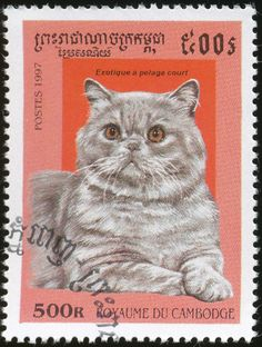 Cambodia 1997 Cat Stamps - Exotic Shorthair. Kittycommotion.com has found that there are lots of cool cat stamps like this one.