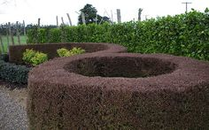 Be creative with hedges. See how this garden was installed at www.facebook.com/livingwallsnz