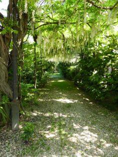Beautiful shaded path in Lido #Venice