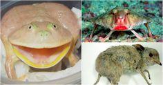 За что ученые так смешно обозвали этих животных?