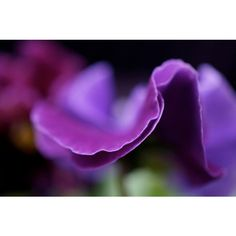 Fine Art Photography, Nature Art, Nursery Decor, Macro Flower... ($15) ❤ liked on Polyvore featuring home, home decor, wall art, green home decor, photographic wall art, purple home accessories, photo wall art and plum wall art