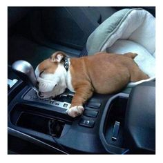 How could you wake this little guy up just to drive? You just can't.