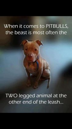 When it comes to PITBULLS, the beast is most often the TWO legged animal at the . When it comes to PITBULLS, the beast is most often the TWO legged animal at the other end of the le Love My Dog, Puppy Love, Animals And Pets, Funny Animals, Cute Animals, Animal Funnies, Diy Pet, Pitbulls, Pit Bull Love