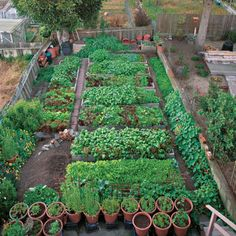 Faced with unplanned retirement, a gardener transforms a weed-choked backyard into a micro market garden that grows greens by the fistful.