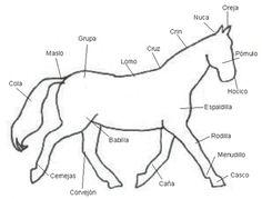 Tatuajes Muslo 958394066103 further T105 Dibujos De Caballos Para Imprimir Y Colorear also Recursos Catequesis Sacramento together with Anotomia furthermore 2008 11 01 archive. on partes del cuerpo caballo