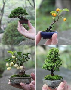 Artistic Use of Gardening Techniques: Bonsai Miniature Tree