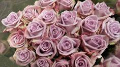 #Rose #Rose #Armando: Available at www.barendsen.nl
