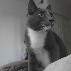 😴😴😴 #instacat_meows #cats_of_instagram #pet #petstagram #cat #catlover  #ilovecats #catofinstagram #sleeping #catstagram #meow #wooju #woobrothers #californiacat #domesticshorthair #sandiego #california #lajolla #ねこ #猫 #냥스타그램 #고양이 #야옹이 #야옹스타그램 #우주 #미국고양이 #야옹 #일상 #lajollalocals #sandiegoconnection #sdlocals #sandiegolocals - posted by wooniewooju  https://www.instagram.com/wooniewooju. See more post on La Jolla at http://LaJollaLocals.com