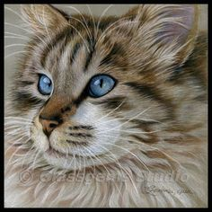 Beautiful longhaired Cat by wildlife and colored pencil artist Gemma Gylling