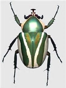 The scarab beetle is a good omen. I noticed it in the sand after I fell to my kn… The scarab beetle is a good omen. I noticed it in the sand after I fell to my knees weeping over… Continue Reading → Beetle Insect, Beetle Bug, Insect Art, Green Beetle, Cool Insects, Bugs And Insects, Cool Bugs, A Bug's Life, Beautiful Bugs
