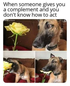 These are the Funny Memes that making you l snicker right now. People sharing hilarious and funny memes, we uncover them and share Funny Animal Memes, Stupid Funny Memes, Cute Funny Animals, Funny Relatable Memes, Funny Cute, Funny Texts, Funny Dogs, True Memes, Funny Stuff