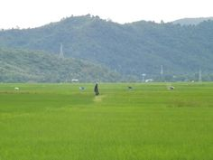 Beautiful green field.