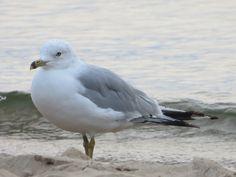 Gull Beach 5