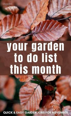 Not sure what to tackle in the garden this month? These quick