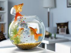 Using of Fish Aquarium at home or workplace is a finest Vastu Sign. It is good to increase peace and prosperity of home or your work place. Cool Backgrounds Wallpapers, Rain Wallpapers, Free Hd Wallpapers, Funny Wallpapers, Fish Wallpaper, Animal Wallpaper, Cool Wallpaper, Mobile Wallpaper, Funny Wallpaper Pictures