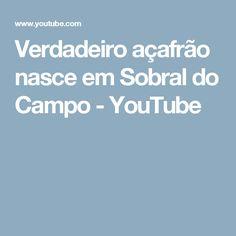 Verdadeiro açafrão nasce em Sobral do Campo - YouTube