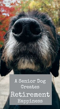"""You're retiring soon and thinking it could feel a little lonely. Get yourself a senior dog! Share your life with another """"seasoned"""" adult."""