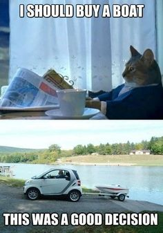 Some boat humor for your Mondays Funny Cat Videos, Funny Cat Pictures, Funny Photos, Funny Cats, Funny Animals, Animal Funnies, Funniest Pictures, Adorable Animals, Crazy Cat Lady
