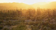 Deserto de Sonora | por BLM