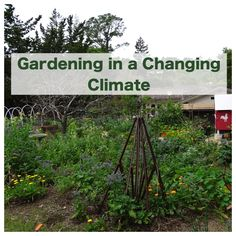 Gardening in a Changing Climate: great tips for dealing with drought and changing temperatures