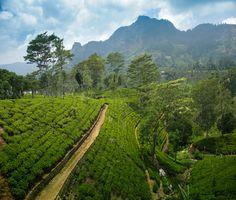 Sri Lanka, le trek des épices...