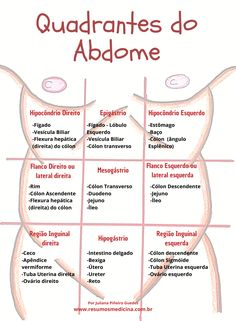 Brain Anatomy, Human Body Anatomy, Medical Anatomy, Anatomy Study, Study Flashcards, Medicine Student, Biomedical Science, Study Planner, Med Student