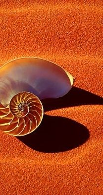 the image of the shell, reminiscent of water, and the orange tones of the sand…