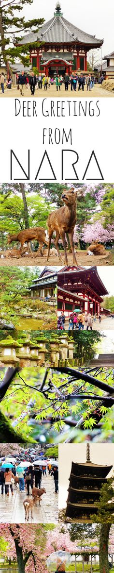 Among deer and temples in Nara #Japan | Travel on the Brain  www.travel4life.club