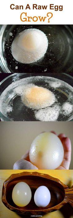 Egg & Osmosis - Bouncy Egg - #SimpleExperiments #FunSTEM #rookieparentingscience