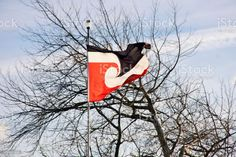 The Tino Rangatiratanga Flag or Māori Flag in Sky The national Māori flag known by it's Maori name Tino Rangatiratanga flapping on a windy day in trees. Celebration Stock Photo Celebration Images, Sky Photos, Windy Day, Video Image, Feature Film, Photo Illustration, Image Now, Royalty Free Images, New Zealand