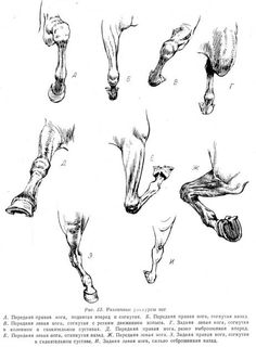 Horse fore fore limbs in action Horse Drawings, Animal Drawings, Art Drawings, Doodle Drawing, Painting & Drawing, Horse Sketch, Horse Anatomy, Horse Illustration, Drawn Art