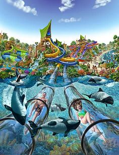 SeaWorld Aquatica Orlando has this waterslide that slides you through a tank of dolphins. Description from pinterest.com. I searched for this on bing.com/images