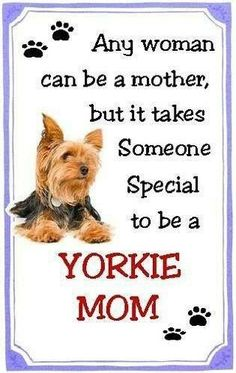 yorkie quotes silky terrier short haircut wish list pinterest more 761