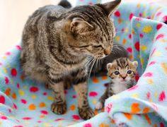 cute kitten and cat mama