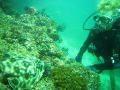Discover Scuba Diving with the Punta Mita Ocean Activities Team