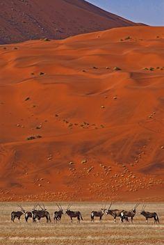 The Namib Desert is oldest desert in the world.  Самая древняя пустыня на планете - пустыня Намиб. Высоченные, невероятные по красоте ярко оранжевые дюны и уникальные обитатели этой пустыни, делают её одним из самых живописных мест на планете.
