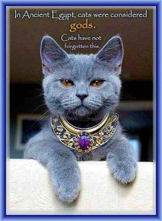 In Ancient Egypt Cat were considered Gods Funny Cats, Funny Animals, Cute Animals, Grey Cats, Blue Cats, Grey Kitten, Beautiful Cats, Animals Beautiful, Gorgeous Gorgeous